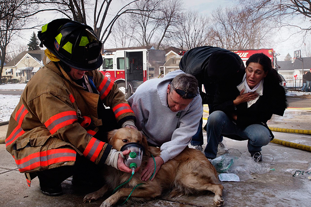 Fireman saving dog